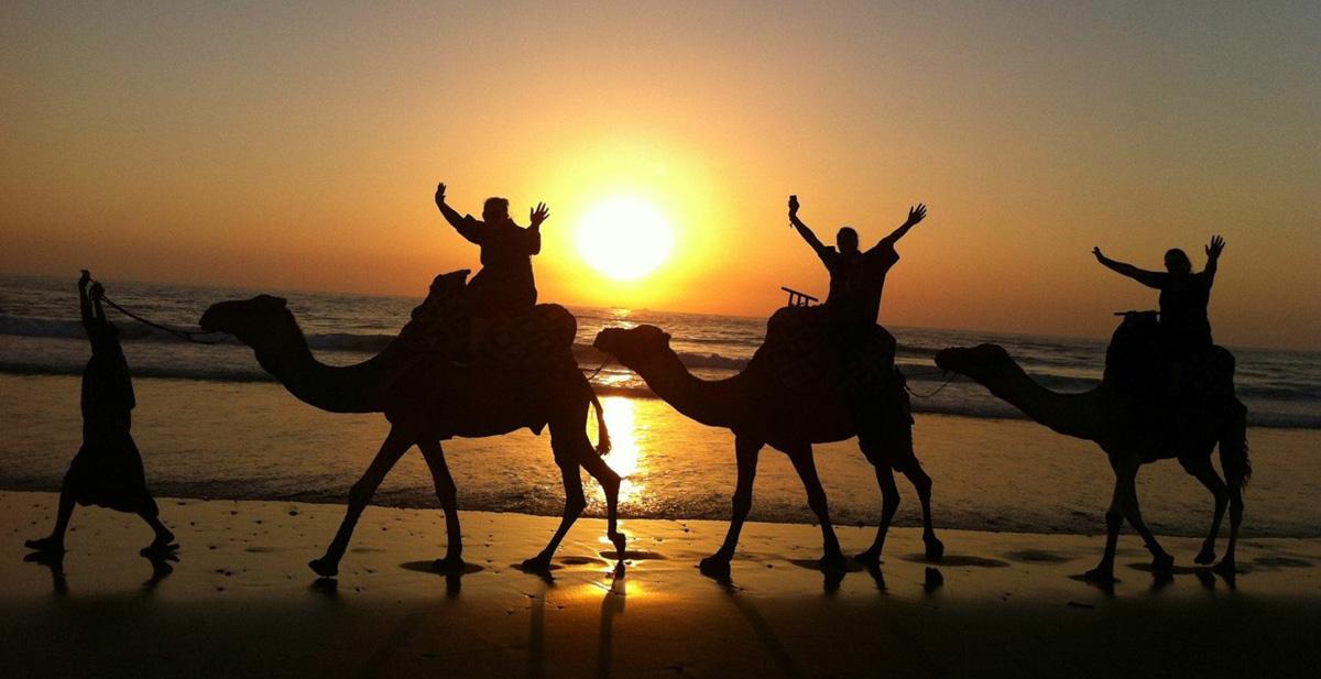 camel ride Surf Journey Morocco
